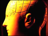 Video Clip - Parts of a brain is distinguished with different numbers