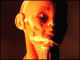 Video Clip - A mannequin with musle tissues is shown